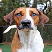 Beagle Mix Dog for adoption in Fort Walton Beach, Florida - WENDY DARLING