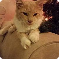 Adopt A Pet :: Mosi - Columbus, OH