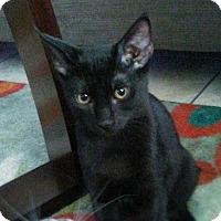 Adopt A Pet :: Fergus - Fort Lauderdale, FL