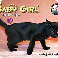 Adopt A Pet :: Baby Girl - Davenport, IA