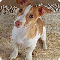 Adopt A Pet :: NOODLE - LaGrange, KY