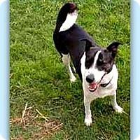Adopt A Pet :: Tiki - Eddy, TX