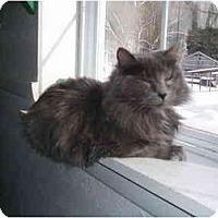 Adopt A Pet :: Clara - Hamburg, NY