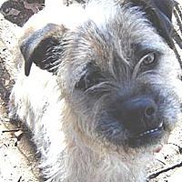 Adopt A Pet :: TATER - Franklinton, NC