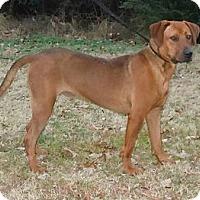 Adopt A Pet :: *Redd - PENDING - Westport, CT