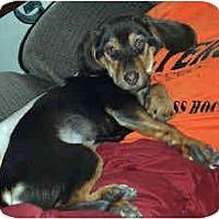 Adopt A Pet :: Mudbud - Novi, MI