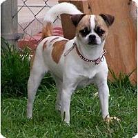 Adopt A Pet :: Baby - San Angelo, TX