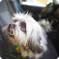 Adopt A Pet :: Rose - Orange, CA