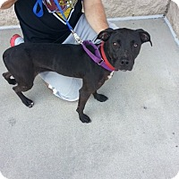Adopt A Pet :: Onyx - Richmond, VA