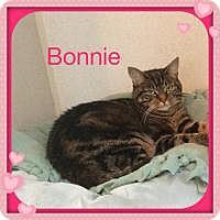 Adopt A Pet :: BONNIE - Hamilton, NJ