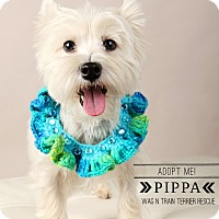 Adopt A Pet :: Pippa-pending adoption - Omaha, NE