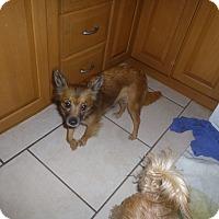 Adopt A Pet :: Jaida - Glastonbury, CT