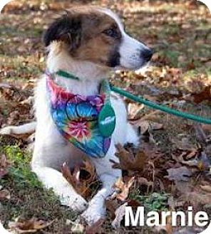 Collie Mix Dog for adoption in Tahlequah, Oklahoma - Marnie