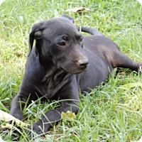 Adopt A Pet :: Hannah - Medina, TN