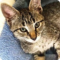 Adopt A Pet :: Kiara - Orange, CA