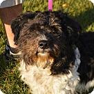 Adopt A Pet :: Bojangles