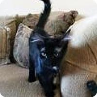 Domestic Mediumhair Kitten for adoption in Mission Viejo, California - Kalamazoo