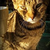 Adopt A Pet :: Kimmie - Fairborn, OH