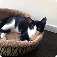 Adopt A Pet :: Marilla - Mississauga, Ontario, ON