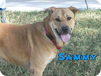 Retriever (Unknown Type) Mix Dog for adoption in Sarasota, Florida - Sammy