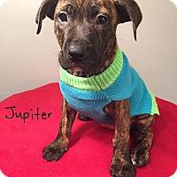 Adopt A Pet :: Jupiter - Toledo, OH