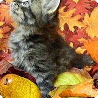 Adopt A Pet :: Taz - Columbus, NE