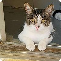 Adopt A Pet :: Curtis - Umatilla, FL