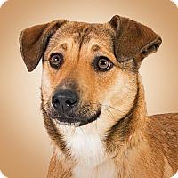 Adopt A Pet :: Eve - Prescott, AZ