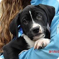 Adopt A Pet :: Tacoma (11 lb) Video! - Sussex, NJ