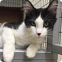 Adopt A Pet :: JJ - San Carlos, CA