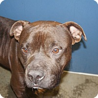 Adopt A Pet :: Chief (HW Neg)** - Henderson, NC