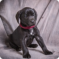 Adopt A Pet :: QUIGLEY - Anna, IL