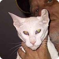 Adopt A Pet :: Vanity - Columbus, OH