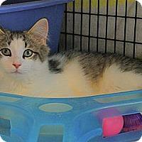 Adopt A Pet :: Hogan - Victor, NY