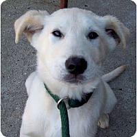 Adopt A Pet :: Puddin - Glastonbury, CT