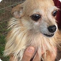 Adopt A Pet :: Mila - Orlando, FL