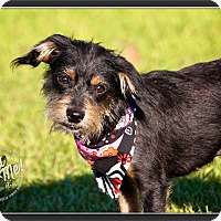Adopt A Pet :: Olivia - Wilmington, DE