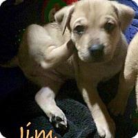 Adopt A Pet :: Jim - Salem, MA