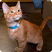 Adopt A Pet :: Jake - Medina, OH