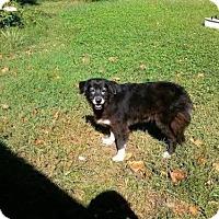Adopt A Pet :: Bitzie - Jacksonville, FL