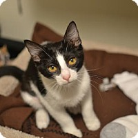 Adopt A Pet :: .Genoise - Baltimore, MD