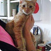 Adopt A Pet :: Frito - Phoenix, AZ