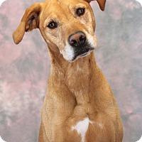 Adopt A Pet :: Sadie - Encinitas, CA