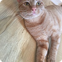 Adopt A Pet :: Garfield/ playful, dog alike - Bryn Mawr, PA