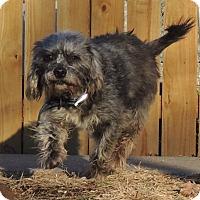 Adopt A Pet :: Danny - Joplin, MO