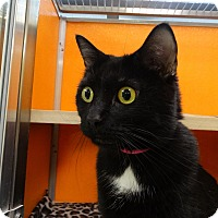 Adopt A Pet :: Baylee - Elyria, OH