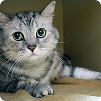 Adopt A Pet :: Touches - Bellevue, WA