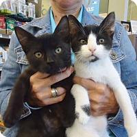 Adopt A Pet :: Jack and Michael - Berkeley, CA