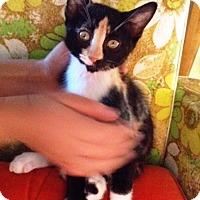 Adopt A Pet :: Anna - Orange, CA