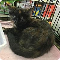 Adopt A Pet :: Nancy - Gilbert, AZ
